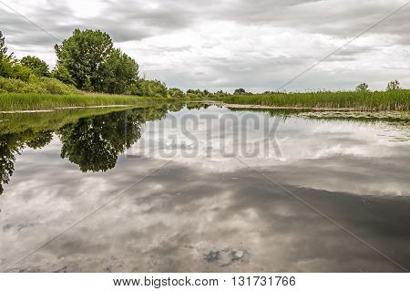 Landscape of River Trees Sky and Bullrush Reflecting in a River. Beautiful Lotus. Nature Reserve. Untached Nature.