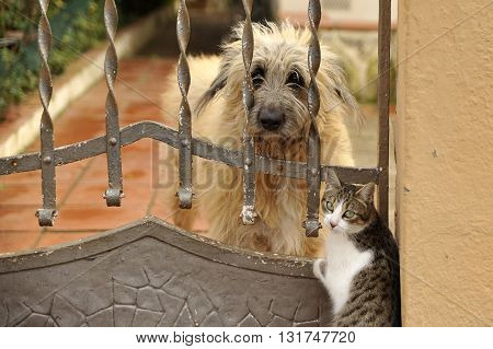 A dog and a cat inseparable friends