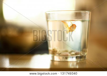 SMALL GOLDFISH IN A GLASS OF WATER