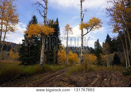 4-wheeling scenery in Fall along Sevenmile Trail in Colorado mountain backcountry.