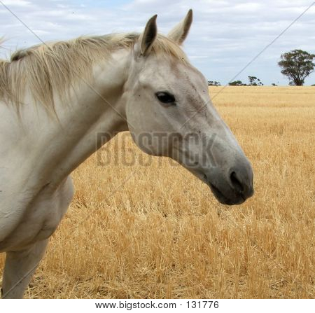Horse In Straw