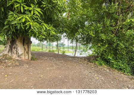 Large Native Trees And Unspoiled Landscape, Jungle Walks Forest Treks Asia