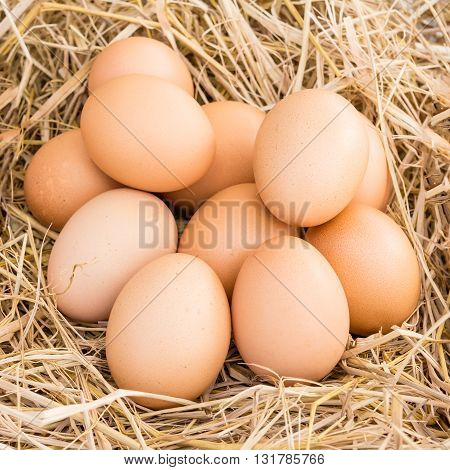 close up of chicken eggs in a straw nest