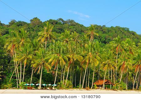 Palm trees on the island
