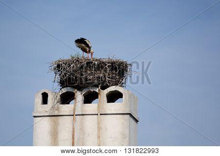 Stork in nest on chimney blue sky as background