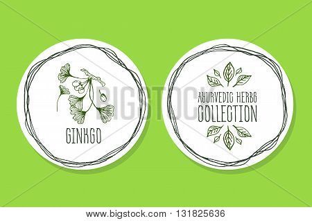 Ayurvedic Herb Collection. Handdrawn Illustration - Health and Nature Set. Natural Supplements. Ayurvedic Herb Label with ginkgo