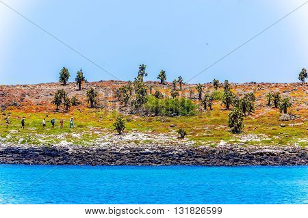 Cactus Trees In Galapagos Islands