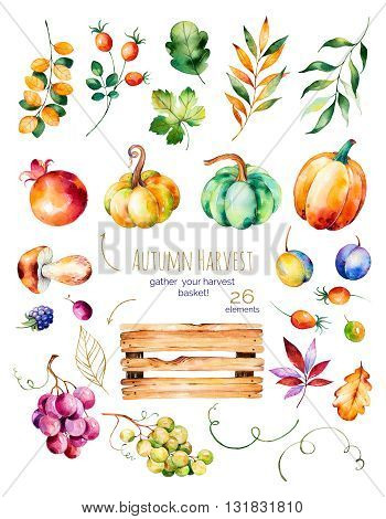 Bright collection with fall leaves, branches, wooden basket, pomegranate, mushroom, pumpkins, grapes vine, prunes and more.