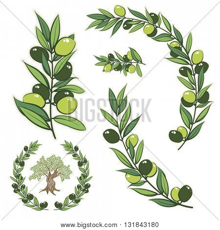 Vector frame with olive branch. Hand drawn circle frame illustration with olive tree.