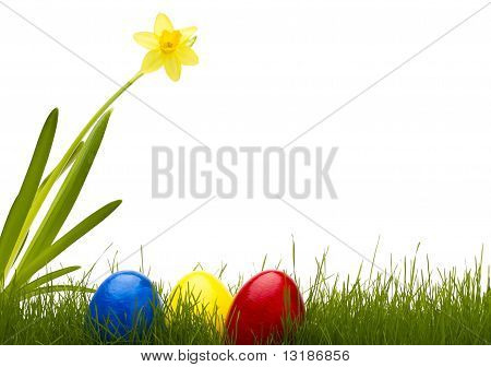 three easter eggs in grass with a daffodil