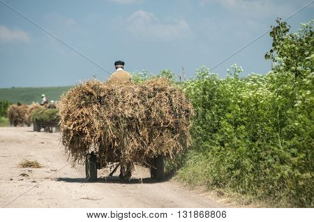 Carts loaded with hay on dusty dirt country road