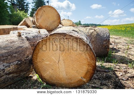 Logging in the village. Felled tree trunks in a pile. Logs are a bunch at the ranch. Background and texture of wood.