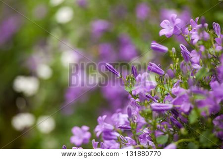 Close up of nice purple flowers in the countryside