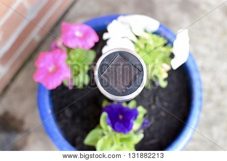Small garden solar panel placed in a plant pot