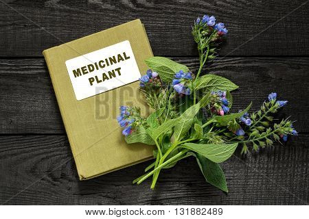 Medicinal plant comfrey (Symphytum officinale) and herbalist handbook. It is used for outdoor applications promotes splicing bones. Caution there are contraindications