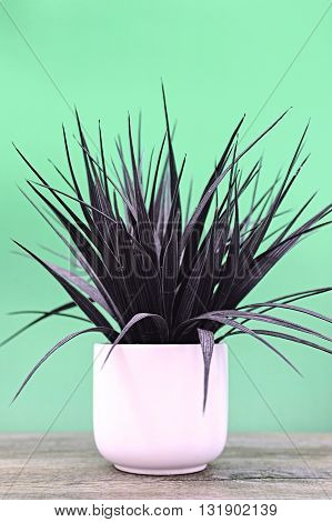 Artificial Indoor Plant