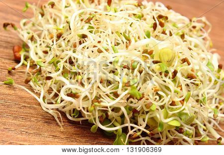 Fresh alfalfa and radish sprouts on wooden surface healthy lifestyle diet food and nutrition