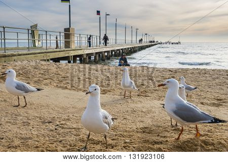 Melbourne, Australia - May 21, 2016: Birds and people visiting the jetty at Frankston of Melbourne, Australia