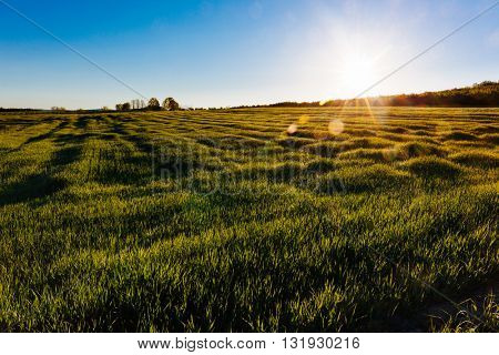 A grass meadow in the early morning with sunbeams.
