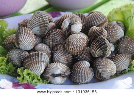 Boiled fresh cockles on lettuce vegetable for seafood serving