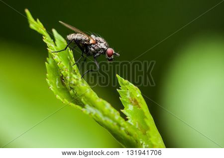 Macro photography of little fly in nature