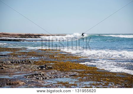 KALBARRI,WA,AUSTRALIA-APRIL 20,2016: Person surfing the point break in the Indian Ocean at Jake's Point with their protective dog on the rocky outcropping in Kalbarri, Western Australia.