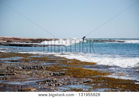KALBARRI,WA,AUSTRALIA-APRIL 20,2016: Person surfing the left point break in Indian Ocean waves at Jake's Point with their protective dogs on the rocky outcropping in Kalbarri, Western Australia.