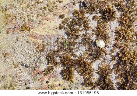 Closeup of the beach reef in the Indian Ocean with vegetation and algae on the coral coast at Jake's Point in Kalbarri, Western Australia.
