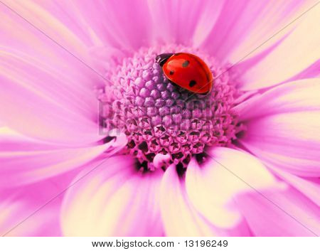 Small ladybug sleeping on flower's petals