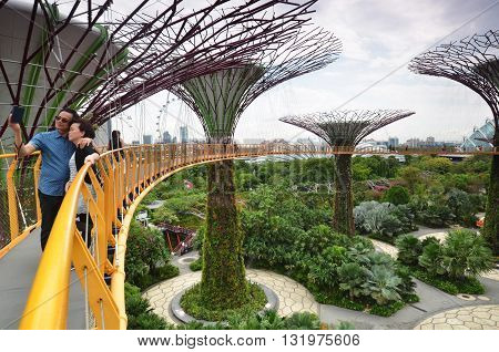Supertree Groove At Gardens By The Bay In Singapore
