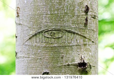 All-Seeing Eye of God on a tree bark, also called Eye of Providence. Symbol for the eye of God, watching over mankind or devine providence. Macro photo.