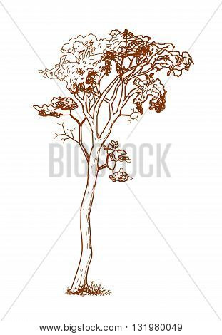 Vintage tree drawing design  - vector illustration.