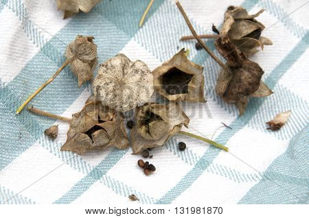 Seeds From Anual Plants.