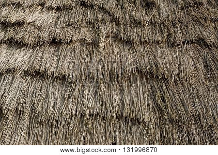 Thatched roof texture of old colonist's house at Madeira island. Close view of straw going by an angle from the top of the roof.