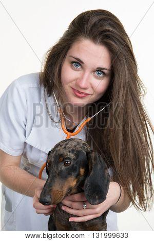 Woman Veterinarian Listens The Heart Of A Dachshund Dog