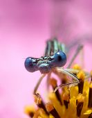 here is a dragon fly on a flower. poster