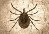 Insect silhouette.Tick parasite. Sketch of Tick. Mite icon. Concrete textured poster