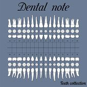 Dental note upper and lower jaw the chewing surface of teeth incisor canine premolar bikus molar wisdom tooth in vector for print or design poster