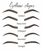 Female eyebrows in different shapes. Female eyes with different forms of eyebrows Vector eyebrows realistic and cartoon style. Collection of isolated women's sketch eyebrows. poster