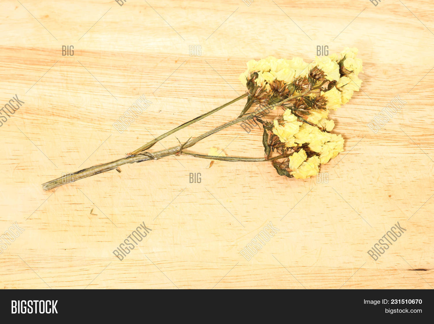 Close single yellow statice flower image photo bigstock close up single of yellow statice flower background use for decoration on brown wooden mightylinksfo
