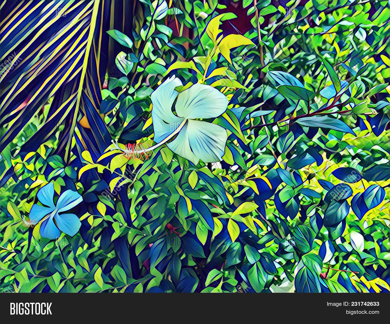 White Hibiscus Image Photo Free Trial Bigstock