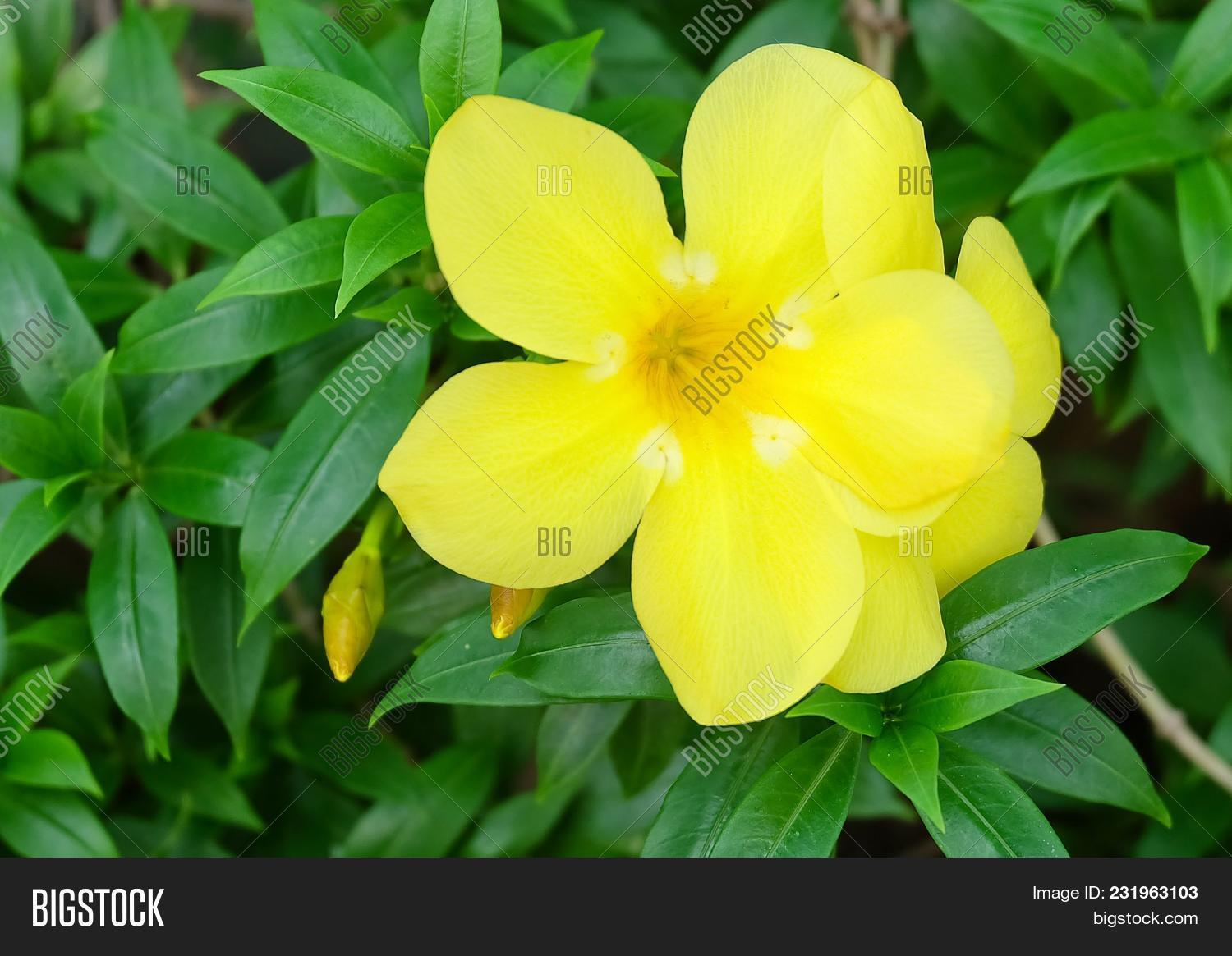 Beautiful Flower Image Photo Free Trial Bigstock