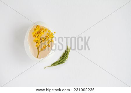 Branch Of Mimosa In A White Shell From A Chicken Egg On White Background