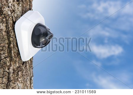 Ip Camera On The Oak Tree Trunk, Beautiful Sky Background With Copyspace. Concept - Technology And S