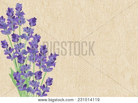 Lavender. Background With Lavender Flowers And The Texture Of The Canvas.