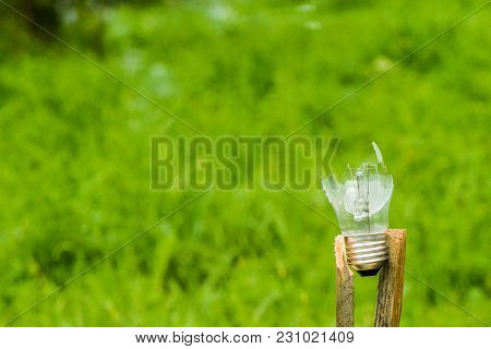 Flying On Broken Glass Bulb On Green Background, Concept For Biological Problems, Pollution Of Natur