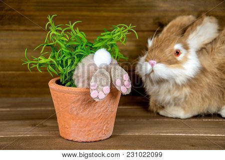 Rear End View Of Fuzzy Bunny In Potted Plant On Rustic Wood
