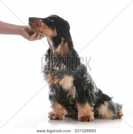 hand petting a dog on the chin isolated on white background