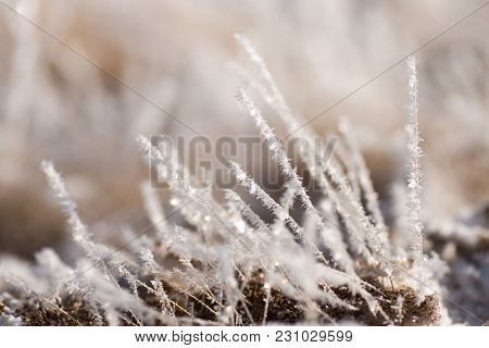 Grass In The Frost, Morning Frost, Baykal