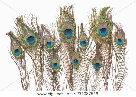 Peacock Feathers Close Up On A White Background